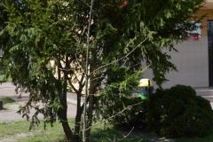 Msza-Św_polowa-Ładzyń_20